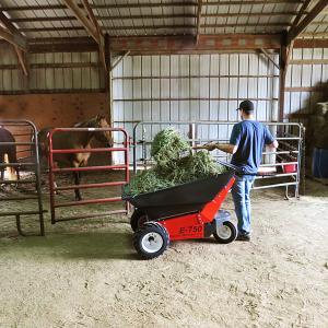 Feeding Horses Hay